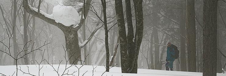 黒沢高原の森