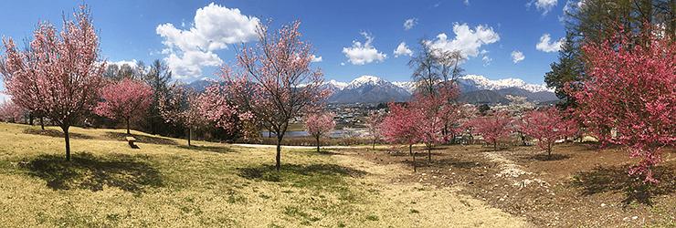 740x250_spring_shiminnomori.png
